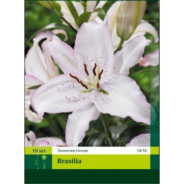 13032, 10 Лилия восточная Brasilia