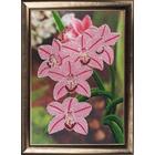 Набор для вышивания бисером Butterfly №208 «Орхидеи»