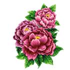 Набор для вышивания Каролинка КТКН-126(р) Розовые пионы 23*30 см