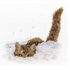 Набор для вышивания М.П.Студия НВ-557 «Кот в снегу» 20*25 см