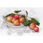 Набор для вышивания М.П.Студия НВ-559 «Вкус диких яблок» 26*18 см