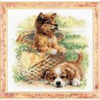 Набор для вышивания Риолис №1390 «Нежный возраст» 25*25 см