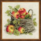 Набор для вышивания Риолис №1450 «Спелые яблоки» 30*30 см
