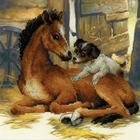 Набор для вышивания Риолис РТ-0052 «Жеребенок и щенок» 30*30 см