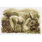 Рисунок на канве МП (28*37 см) 1541 «Лошадь» (снят)