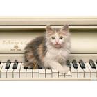 Алмазная мозаика Milato № 208 «Котенок музыкант»