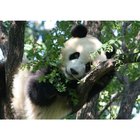 Алмазная мозаика Magic Stitch № 321 «Панда на дереве»