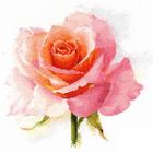 Набор для вышивания Алиса 2-40 «Дыхание розы. Нежность.» 24*24 см