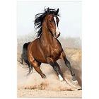 Алмазная мозаика Milato № 254  «Дикий конь»