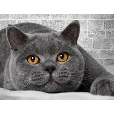 Алмазная мозаика АЖ-1463 «Британский кот» в интернет-магазине Швейпрофи.рф