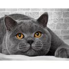 Алмазная мозаика АЖ-1463 «Британский кот»