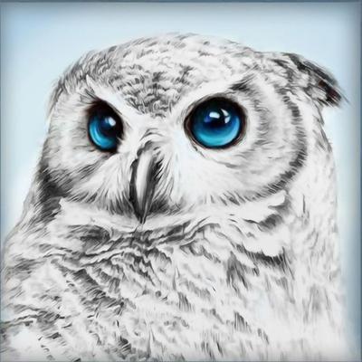 Алмазная мозаика АЖ-1549  «Взгляд совы» в интернет-магазине Швейпрофи.рф