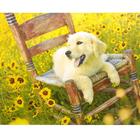 Набор для раскрашивания Paintboy E680 «Солнечный друг»
