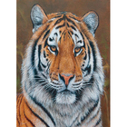 Набор для раскрашивания Molly KH0250  «Амурский тигр» 15*20 см