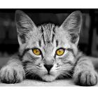 Набор для раскрашивания MDK №9 «Без кота и жизнь и не та»