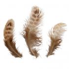 Перья 5AS-054  декор. 5-7 см (уп 30 шт) 7724150 бежевый/коричневый