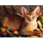 Алмазная мозаика АЖ-1778  «Абиссинский кот» 30*40 см