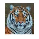 Набор для раскрашивания Molly KH0699  «Тигр» 30*30 см