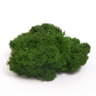 Мох (уп. 50 г) стабилизированный BMSP-50H т.зеленый
