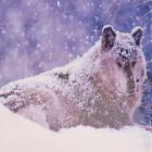 Алмазная мозаика DIY (с рамкой) LM-K20211 «Зимний волк» 20*20 см
