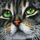 Алмазная мозаика Подсолнух UC196  «Зеленоглазый кот» 20*20 см на подрамнике