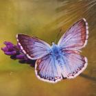 Алмазная мозаика DIY (с рамкой) LM-K20020 «Голубая бабочка» 20*20 см