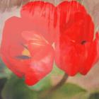 Алмазная мозаика DIY (с рамкой) LM-K20107 «Красные маки» 20*20 см
