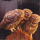 Алмазная мозаика DIY (с рамкой) LM-K20183 «Три совы» 20*20 см