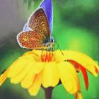 Алмазная мозаика DIY (с рамкой) LM-K20214 «Бабочка на цветке» 20*20 см