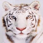 Алмазная мозаика DIY (с рамкой) LM-K20245 «Белый тигр» 20*20 см