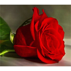 Алмазная мозаика C 0100 «Роза на столе»