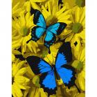 Картина по номерам Molly KH0794 «Синие бабочки в цветах » 15*20 см