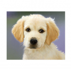 Картина по номерам Molly KH0869  «Пушистый щенок»  20*30 см
