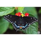 Алмазная мозаика D 3433 «Черная бабочка»