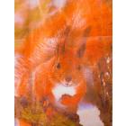Рисунок на канве Гамма 80231 Белочка 27*35 см