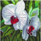 Алмазная мозаика Подсолнух UC229 «Белые орхидеи» 20*20 см на подрамнике