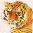 Алмазная мозаика NEW WORLD SW2150 «Тигр» 25*25 см