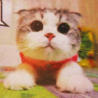 Алмазная мозаика NEW WORLD SW2106 «Котенок» 25*25 см