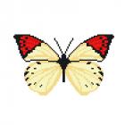 Набор для вышивания Нитекс 2319 «Бабочка Балянка Гемобоя» 22*22 см