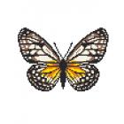 Набор для вышивания Нитекс 2395 «Бабочка орденская лента» 22*22 см