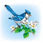 Рисунок на канве М.П. Студия СК-037 «На ветке яблони» 21*30 см
