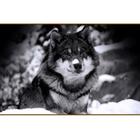 Алмазная мозаика DIY Z -105 «Волк»