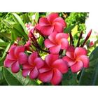 Алмазная мозаика Milato № 115 «Тропические цветы»