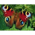 Алмазная мозаика Milato № 312 «Бабочка Хамелеон»