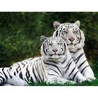 Алмазная мозаика Гранни AG0408 «Влюбленные тигры»