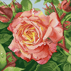 Алмазная мозаика Паутинка М208 «Чайная роза»